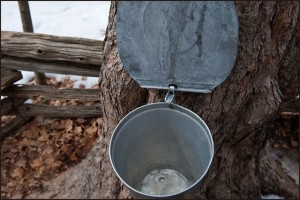 Maple_Syrup_Festival_020